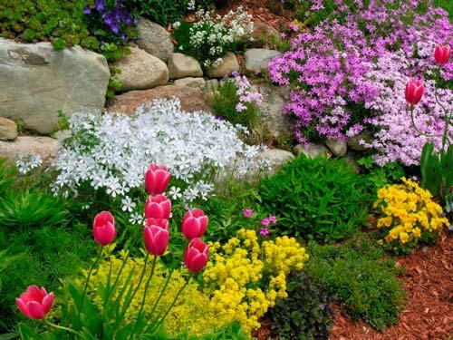 Чтобы горка цвела весь сезон, надо подобрать растения правильно